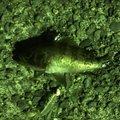 Sakamotp Keiさんの神奈川県でのメバルの釣果写真