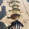 よっしーさんの大分県佐伯市での釣果写真