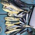 Keiichiroさんの沖縄県石垣市での釣果写真