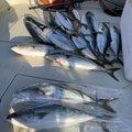 Ryota さんの長崎県南松浦郡での釣果写真