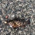 しゃんぴーさんの福岡県古賀市での釣果写真