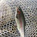 ricoさんの静岡県裾野市での釣果写真