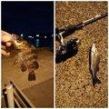 manabuさんの千葉県銚子市での釣果写真