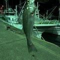 Yomaさんの千葉県銚子市での釣果写真