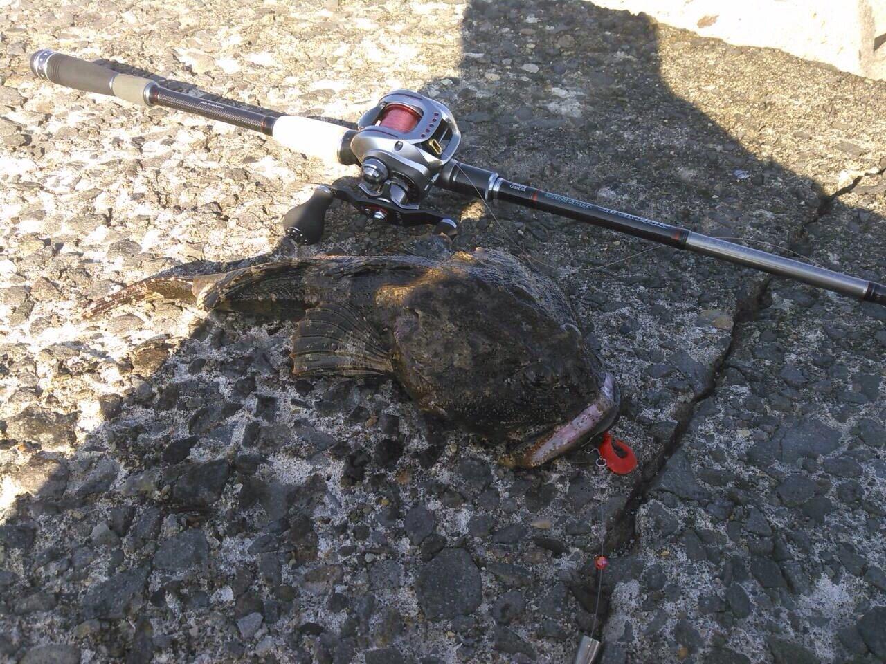 0138STYLEさんの投稿画像,写っている魚は