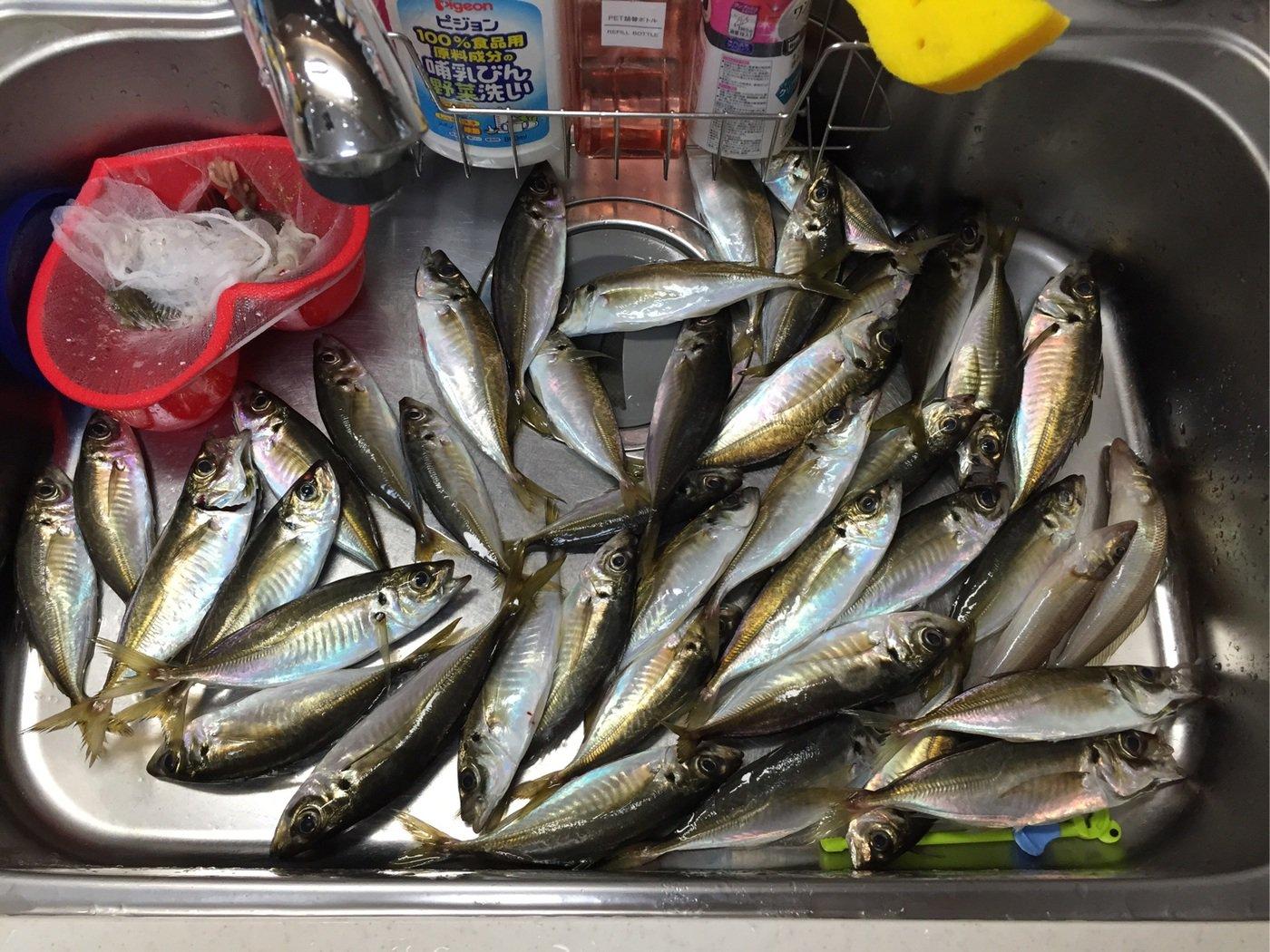 すずけんさんの投稿画像,写っている魚はアジ