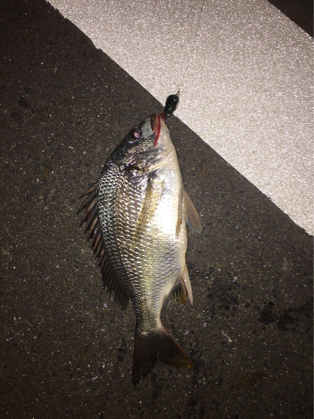 ユキヤさんの投稿画像,写っている魚はキチヌ