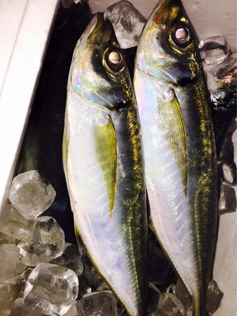 名無しさんの投稿画像,写っている魚はアジ