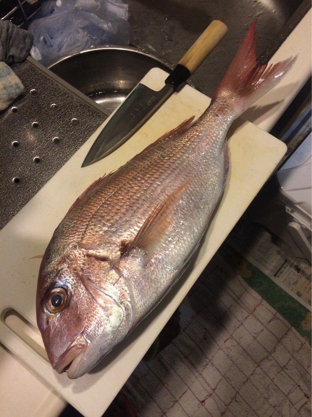 Kyoheiさんの投稿画像,写っている魚はマダイ