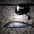 アブさんの兵庫県高砂市での釣果写真