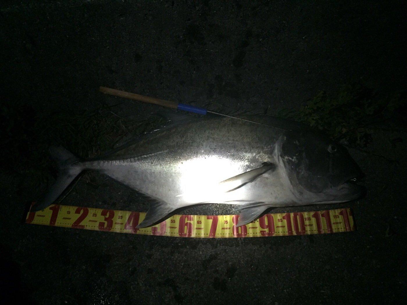 ボスさんの投稿画像,写っている魚はロウニンアジ