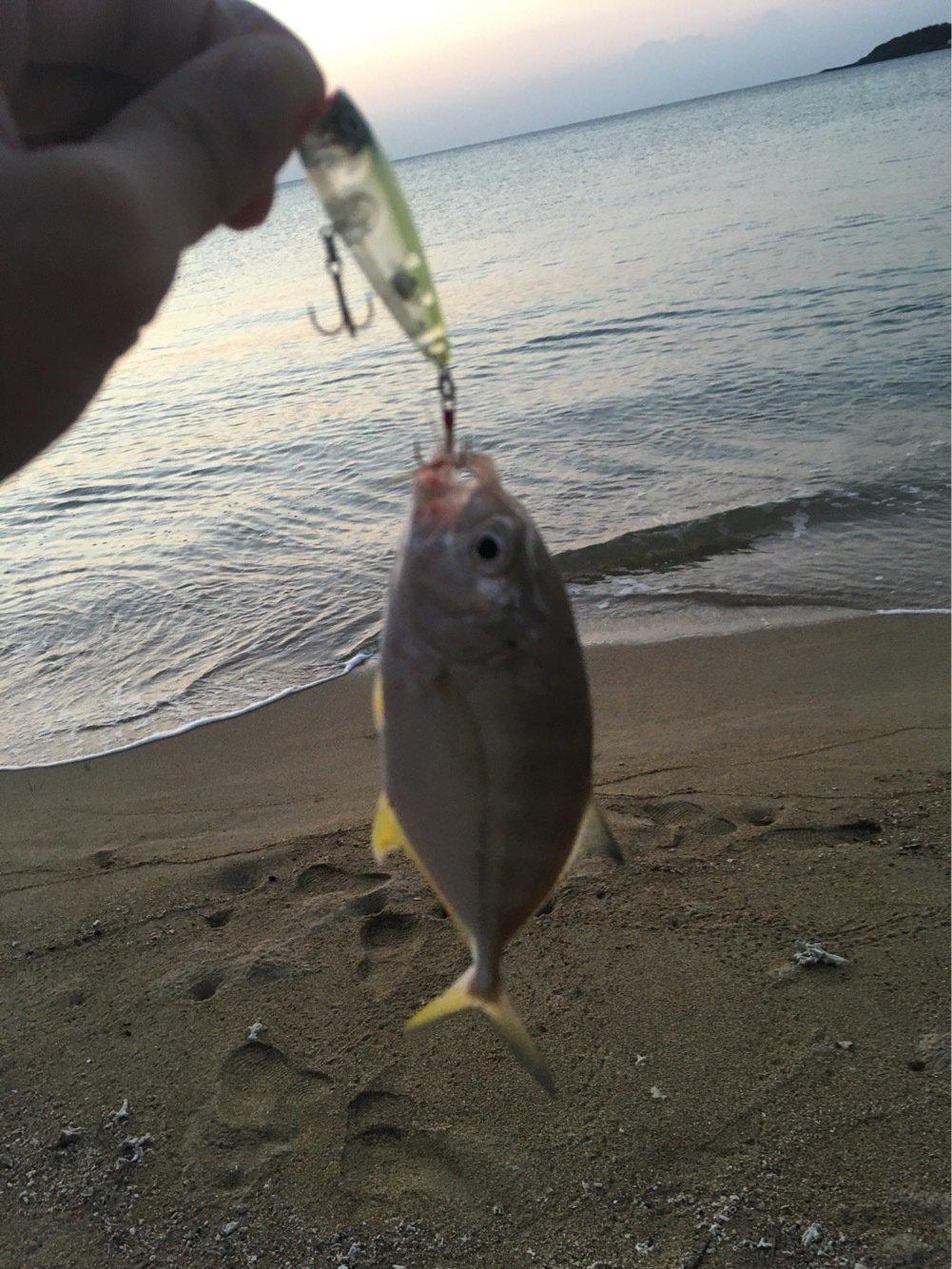 大五郎さんの投稿画像,写っている魚はオニヒラアジ