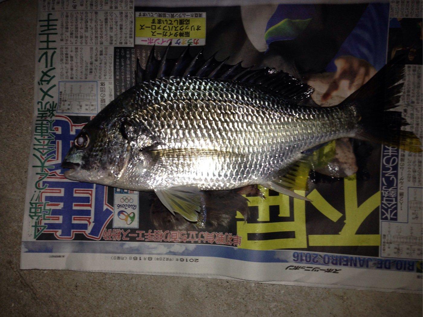 ベルカンプリンさんの投稿画像,写っている魚はキチヌ
