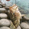 88diverさんの沖縄県沖縄市での釣果写真