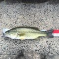 ITRさんの山形県東村山郡での釣果写真