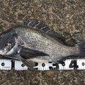 こまさんの愛知県東海市での釣果写真