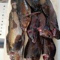 @toshiさんの宮城県牡鹿郡でのアイナメの釣果写真