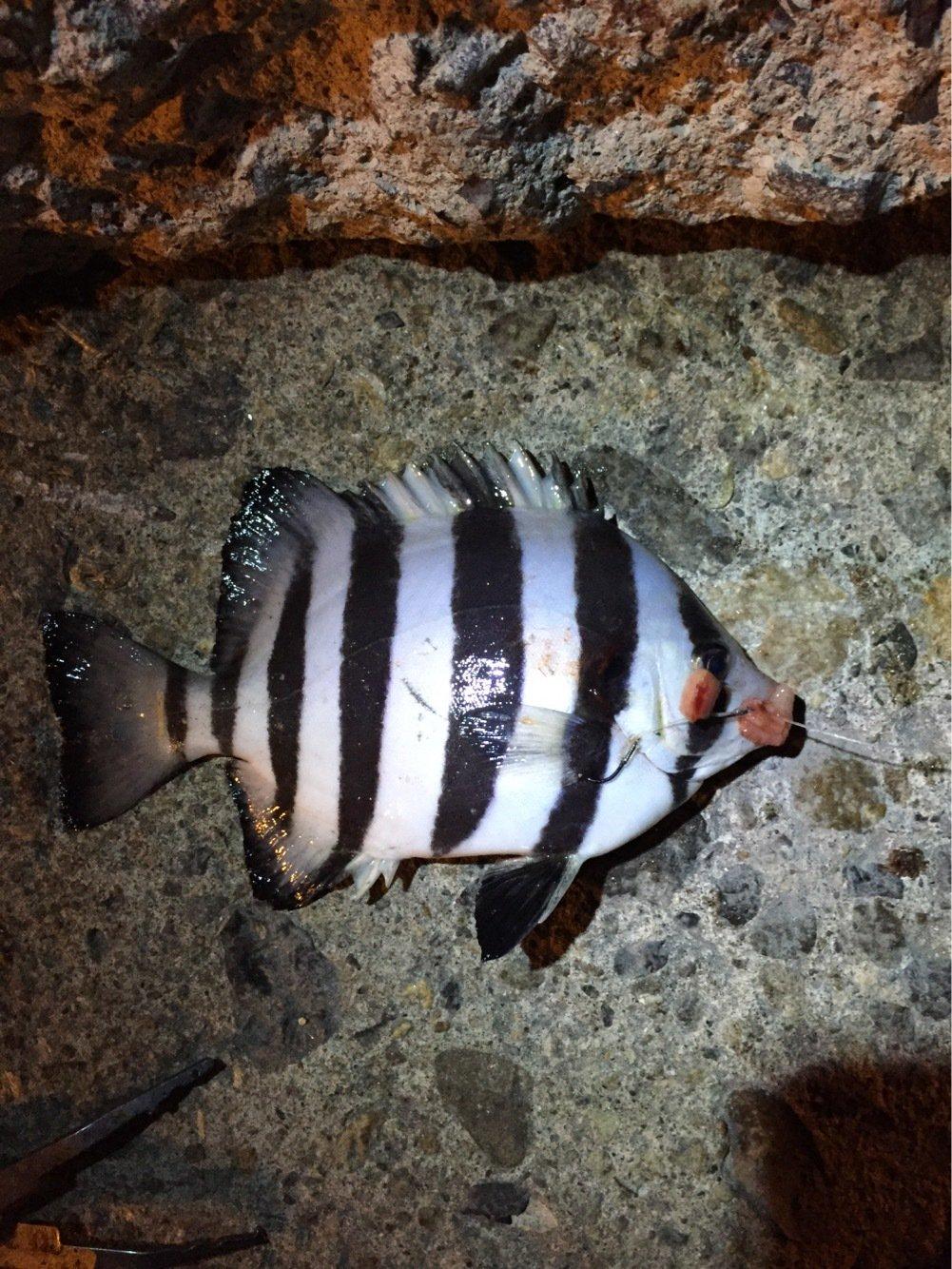 ゆうさんの投稿画像,写っている魚は
