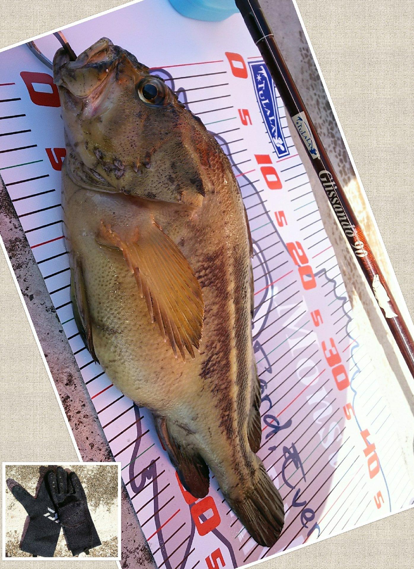 かなぼうさんの投稿画像,写っている魚はシマゾイ