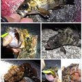 SOL Pianomaniaさんの静岡県御前崎市でのカサゴの釣果写真