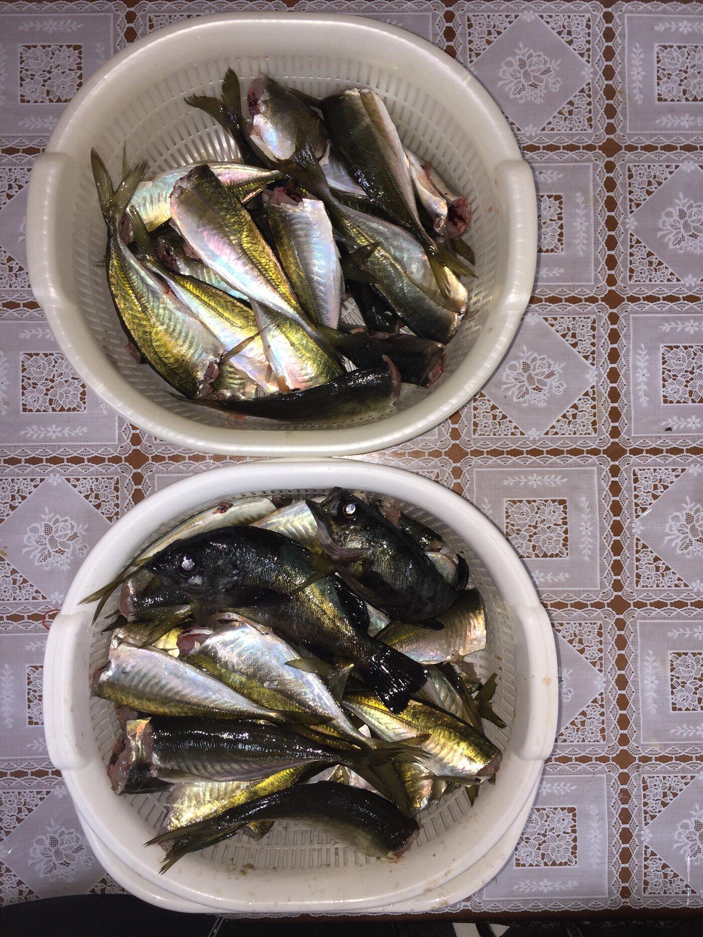 波那の慶治さんの投稿画像,写っている魚は
