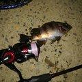 cool-0314さんの新潟県西蒲原郡での釣果写真