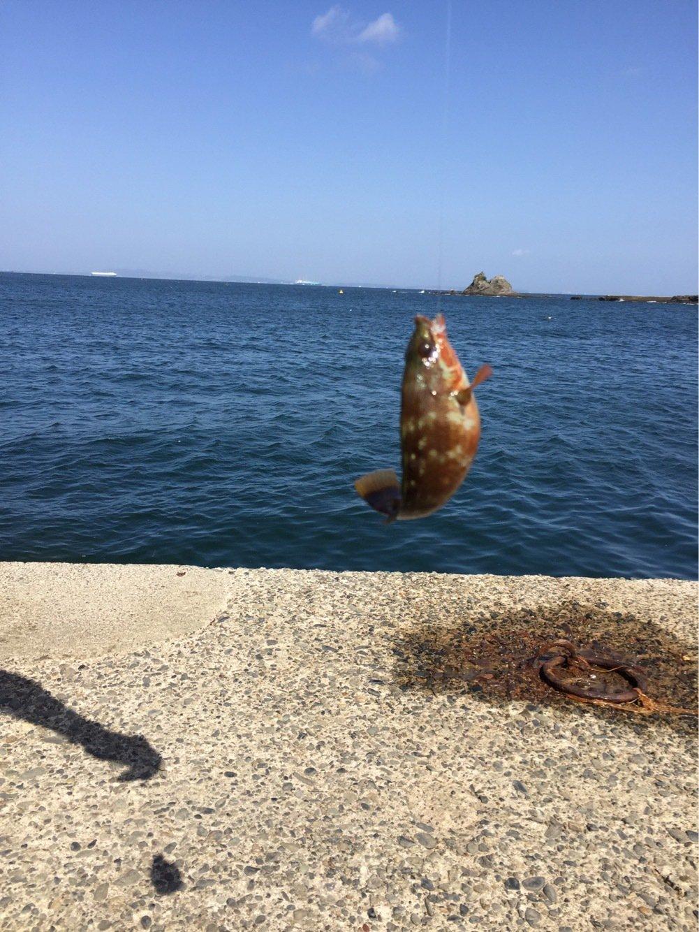 はる3さんの投稿画像,写っている魚はアカササノハベラ