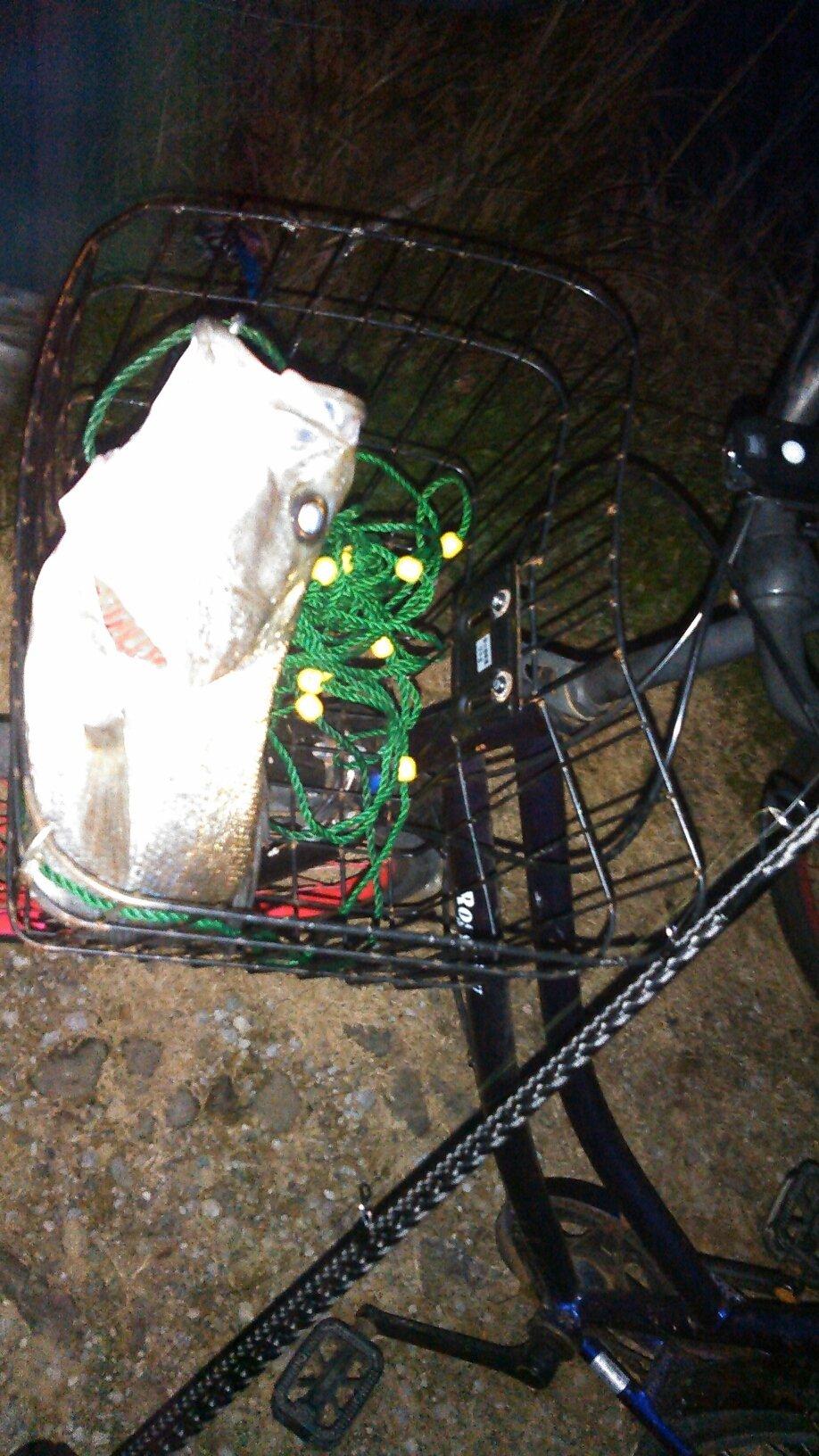 西ナリさんの投稿画像,写っている魚は