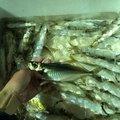 ラテス81さんの大分県臼杵市での釣果写真