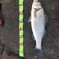 副部長さんの宮崎県延岡市での釣果写真