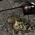 PLACEさんの佐賀県での釣果写真
