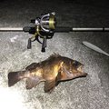 ゆうさんの山口県阿武郡での釣果写真