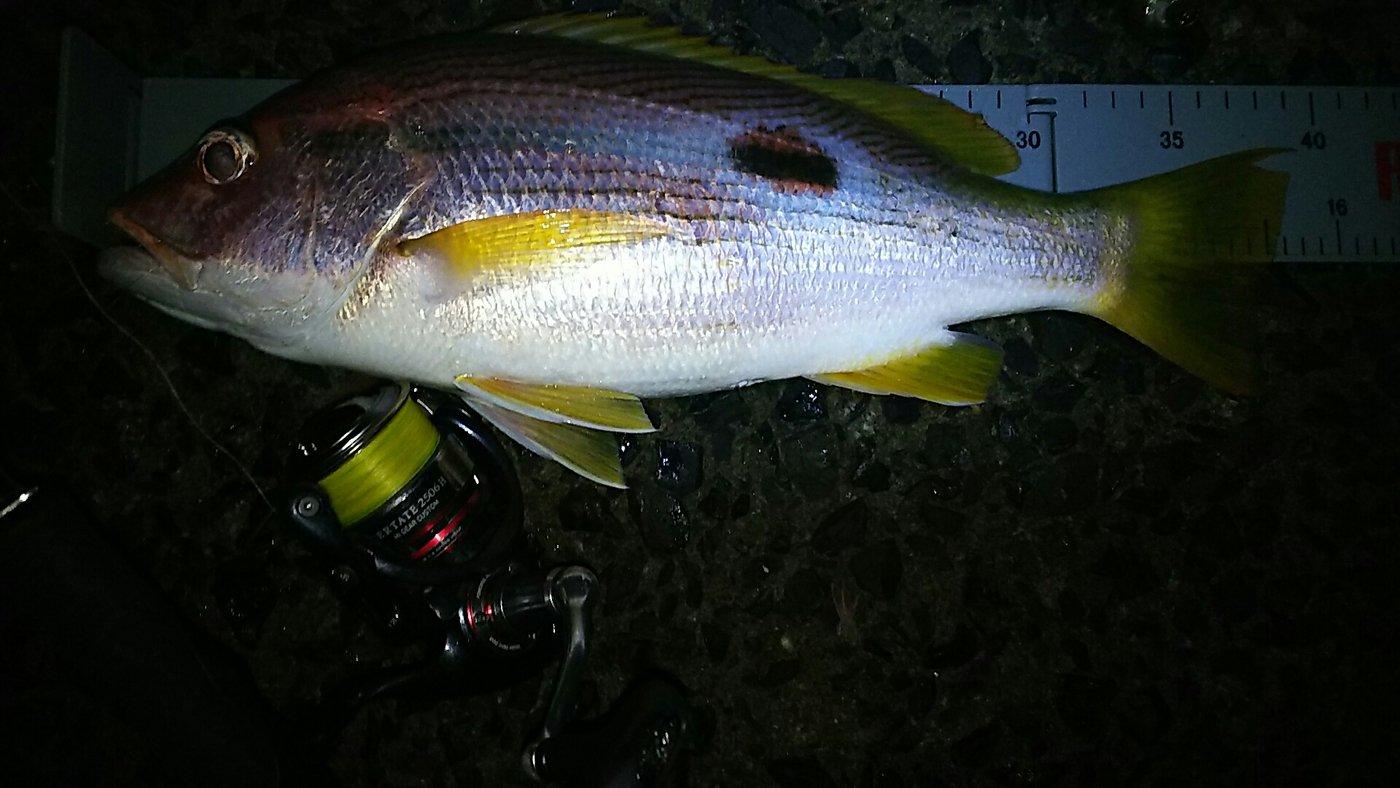 釣り吉四平さんの投稿画像,写っている魚はフエダイ