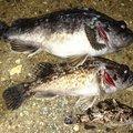 ブラックさんの石川県野々市市での釣果写真