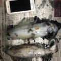 Koshiroさんの長崎県東彼杵郡での釣果写真
