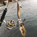 ゆうさんの広島県山県郡での釣果写真