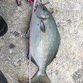 釣りマンさんの沖縄県名護市での釣果写真