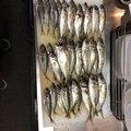 レオくんさんの大分県大分市での釣果写真