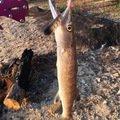 大五郎さんの鹿児島県大島郡でのオニカマスの釣果写真