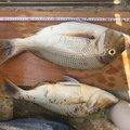 skaさんの沖縄県沖縄市での釣果写真