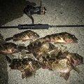 たっかー@さかな狩人さんの京都府での釣果写真