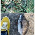 setoちゃんさんの鹿児島県霧島市での釣果写真
