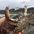 カルビさんの静岡県下田市での釣果写真