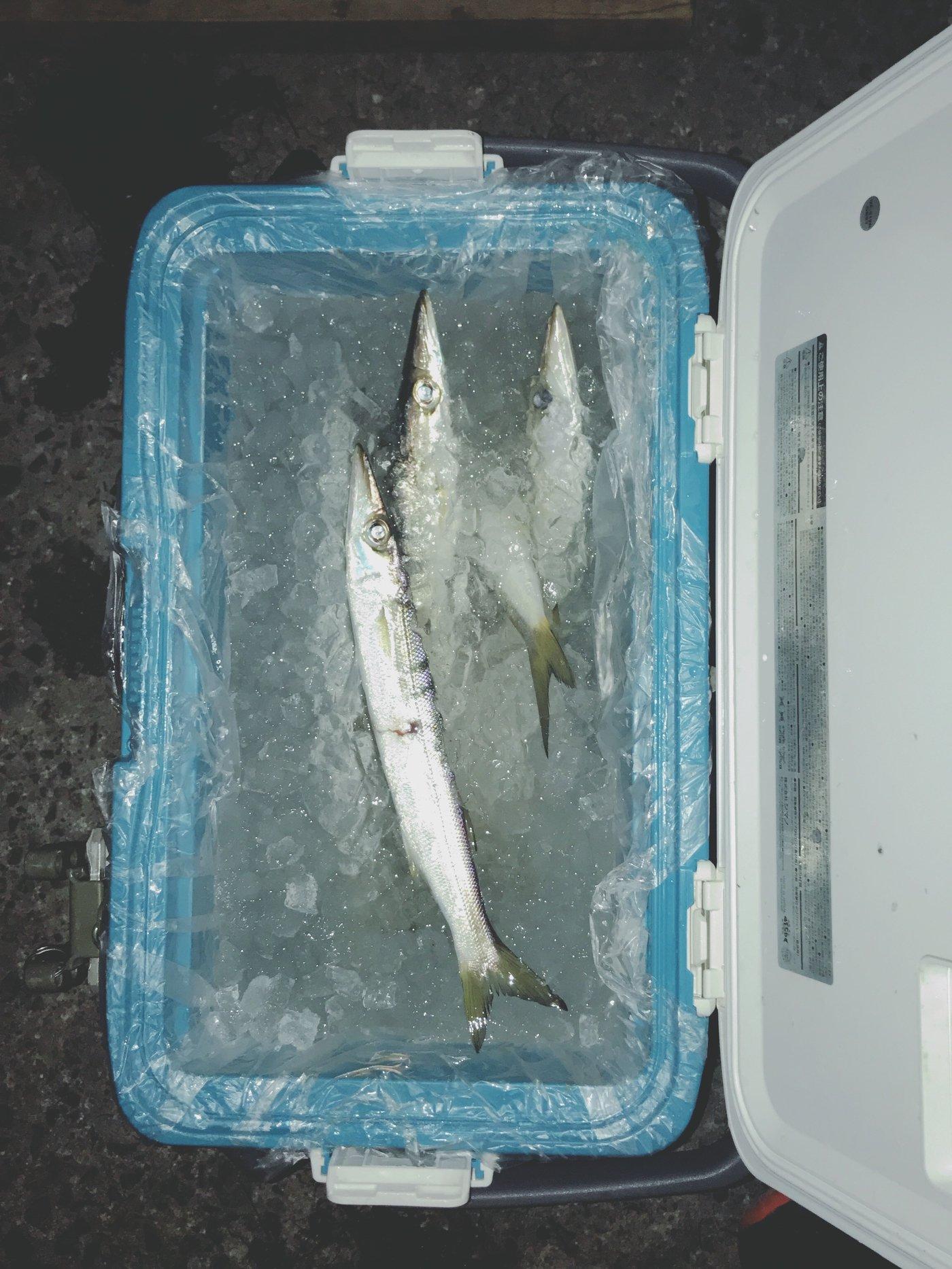 G.Takaさんの投稿画像,写っている魚はアジ,カマス
