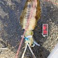 COさんの鹿児島県肝属郡での釣果写真