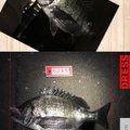軽油さんの大阪府堺市での釣果写真