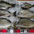 良有さんの広島県安芸郡での釣果写真