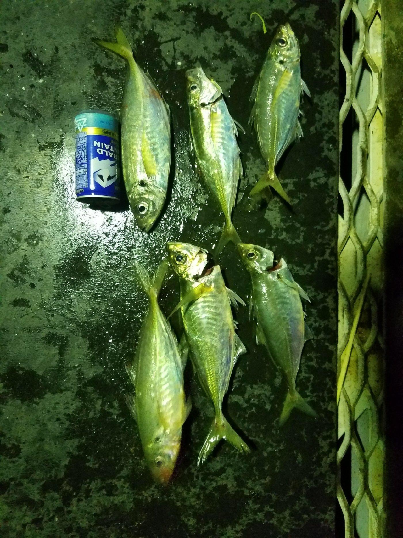あきかんさんの投稿画像,写っている魚は