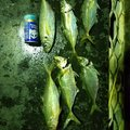 あきかんさんの宮崎県日向市での釣果写真