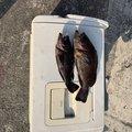 鬮場驛さんの岡山県での釣果写真